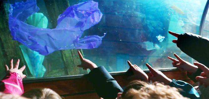 Greenpeace – Aquarium – Irlande - 3