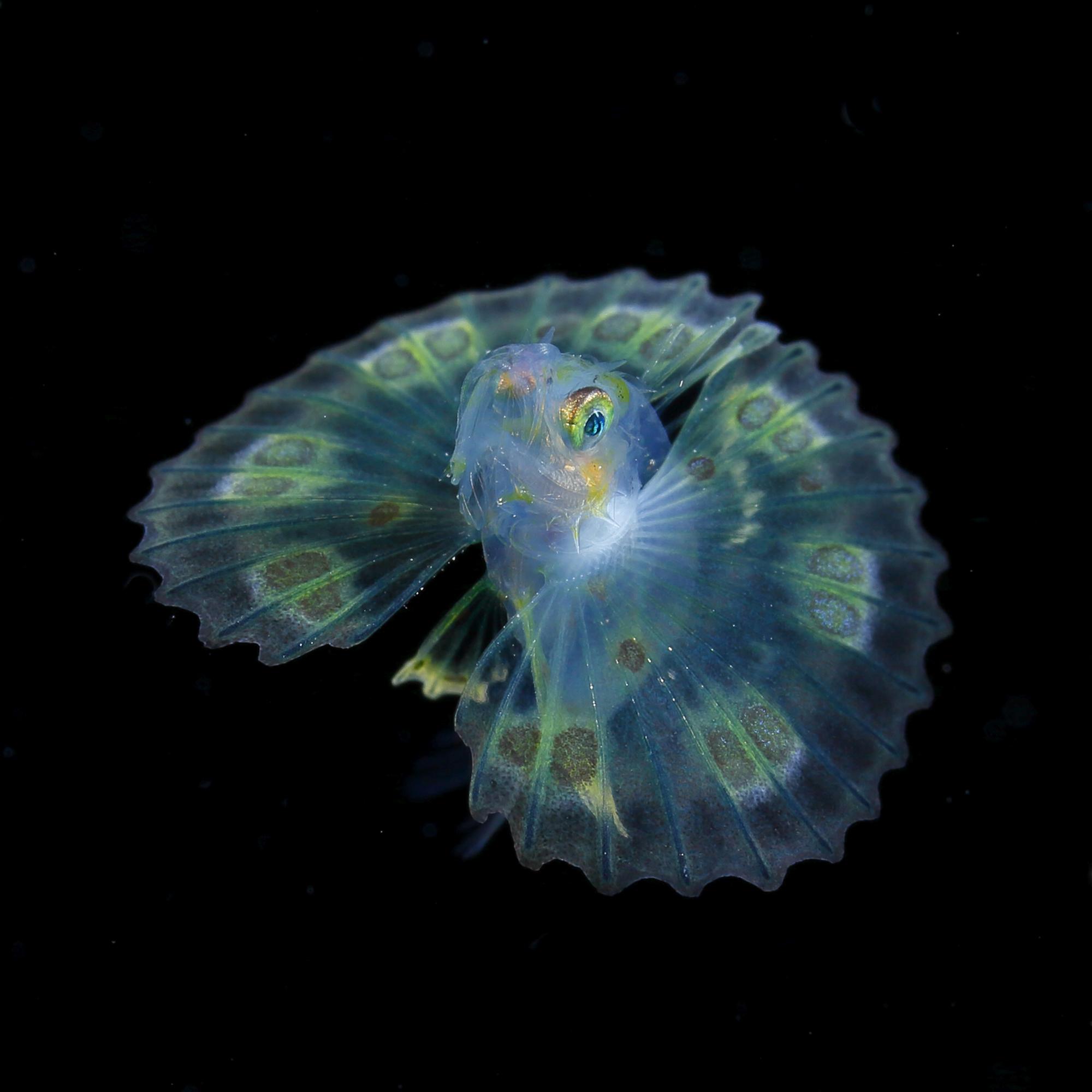 Joyaux dans la mer de nuit : Le plancton lumineux | Mer et