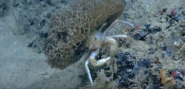 L'image du Jour : Le crabe sumo ! By Jack35 Capture1
