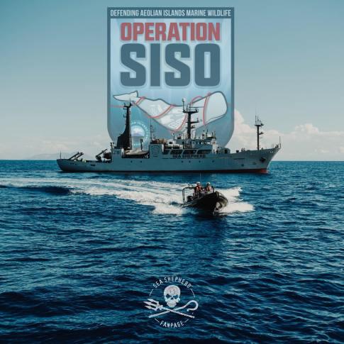 L'image du Jour : Opération Siso 2019 : Campagne de Sea Shepherd pour protéger la mer Méditerranée contre la pêche illégale ! By Jack35 1-5
